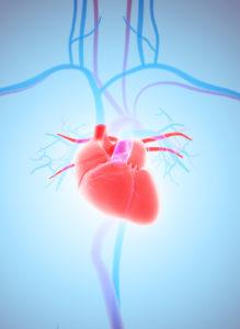 Herz-Kreislauf-System